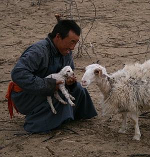 Mongolia man baby sheep