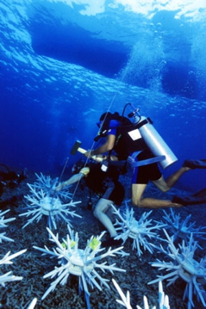 Sulawesi diving