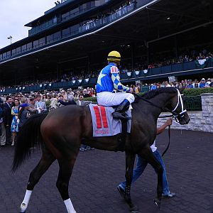 race horse Kentucky